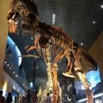いのちのたび博物館に行ってきました。